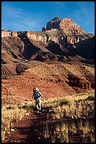 Backpacker, Escalante Route trail. Grand Canyon National Park ( color)