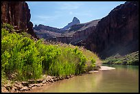 Vegetation thicket on banks of Colorado River. Grand Canyon National Park ( color)