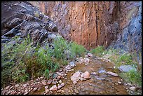 Cliffs and stream, Clear Creek. Grand Canyon National Park ( color)