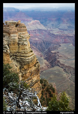 Snow on branches and Mather Point. Grand Canyon National Park (color)