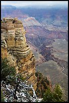 Snow on branches and Mather Point. Grand Canyon National Park ( color)