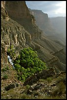Thunder Spring and Tapeats Creek, morning. Grand Canyon National Park ( color)