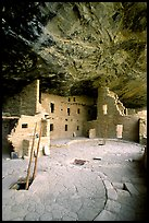 Ladder emerging from Kiva and Spruce Tree house. Mesa Verde National Park ( color)