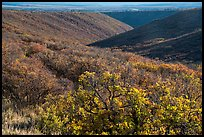 Gambel oak and Utah serviceberry brighten Wetherill Mesa slopes in autumn. Mesa Verde National Park ( color)