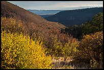Autumn foliage of  Mountain shrub community, Wetherill Mesa. Mesa Verde National Park ( color)