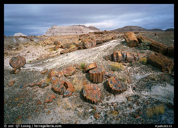 Petrified log and prehistoric-looking badlands. Petrified Forest National Park, Arizona, USA.