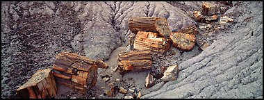 Petrifed logs in badland folds. Petrified Forest National Park (Panoramic color)