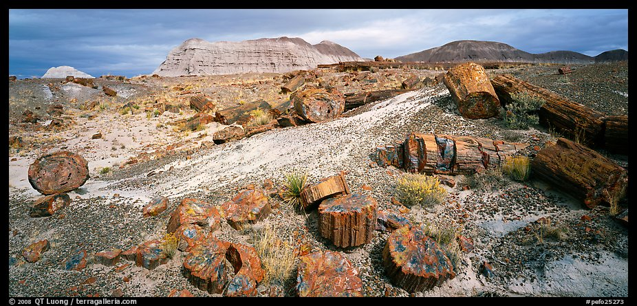 Colorful sections of petrified wood. Petrified Forest National Park (color)