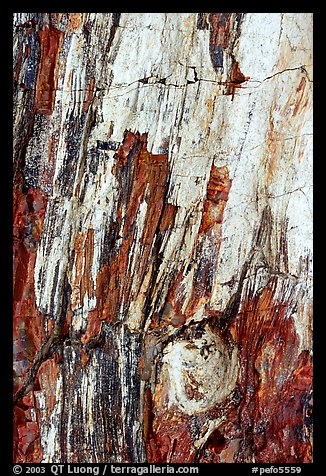 Detail of Triassic Era fossilized wood. Petrified Forest National Park, Arizona, USA.
