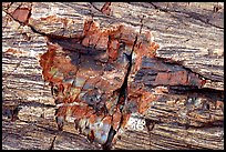 Petrified log detail with bark. Petrified Forest National Park ( color)