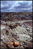 Petrifieds logs and Blue Mesa, mid-day. Petrified Forest National Park, Arizona, USA. (color)