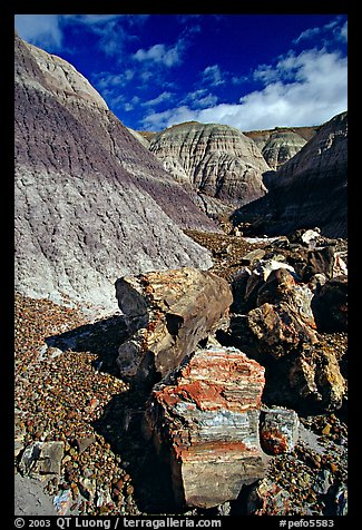 Colorful fossilized logs in Blue Mesa, afternoon. Petrified Forest National Park, Arizona, USA.