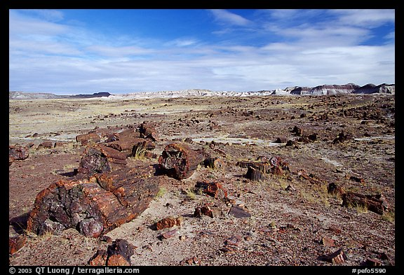 Long Logs area, morning. Petrified Forest National Park (color)