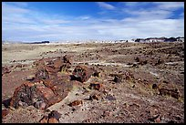 Long Logs area, morning. Petrified Forest National Park, Arizona, USA.