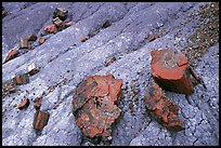 Red slices of petrified wood and blue clay, Long Logs area. Petrified Forest National Park, Arizona, USA. (color)