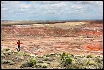 Visitor looking, Painted Desert near Tiponi Point. Petrified Forest National Park ( color)