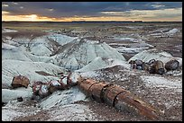 Broken logs of petrified wood at sunset, Crystal Forest. Petrified Forest National Park ( color)