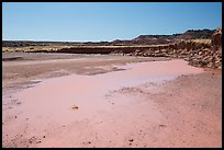 Water in Lithodendron Wash. Petrified Forest National Park ( color)
