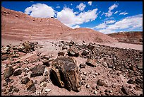 Black Forest, Black Forest Wilderness. Petrified Forest National Park ( color)