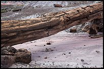 Natural bridge formed by petrified log. Petrified Forest National Park ( color)