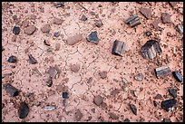 Ground view with black petrified wood. Petrified Forest National Park ( color)