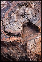 Close-up of black petrified log. Petrified Forest National Park ( color)