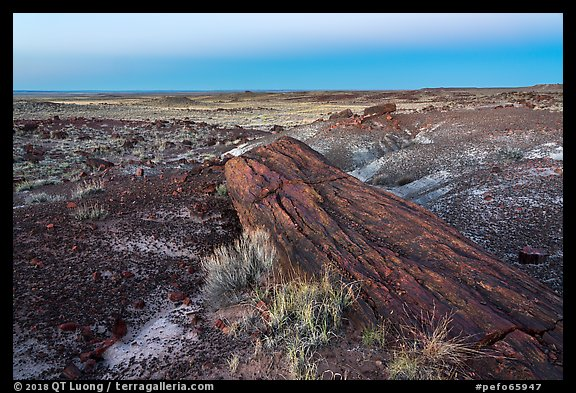 Long petrified longs and badlands at dawn. Petrified Forest National Park (color)