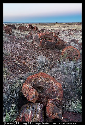 Petrified logs sections at dawn, Longs Logs. Petrified Forest National Park (color)