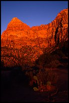 Cactus and Watchman at sunset. Zion National Park ( color)
