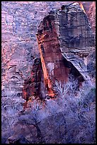 The Pulpit and bare trees, Zion Canyon. Zion National Park ( color)