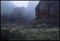 Rainy afternoon, Zion Canyon. Zion National Park ( color)