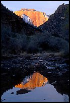 West temple reflected in Pine Creek, sunrise. Zion National Park ( color)