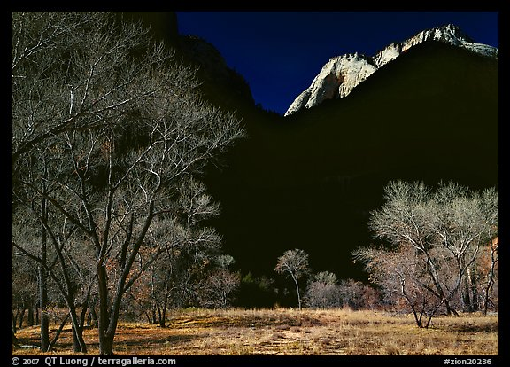 Bare cottonwoods and shadows near Zion Lodge. Zion National Park (color)