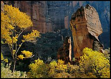 The Pulpit, temple of Sinawava, late morning. Zion National Park ( color)