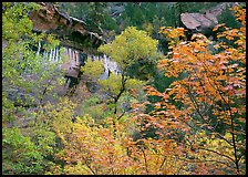 Cliff, waterfall, and trees in fall colors, near  first Emerald Pool. Zion National Park ( color)