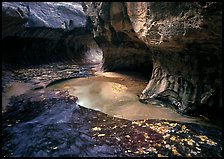Water flowing in pools in  Subway, Left Fork of the North Creek. Zion National Park ( color)