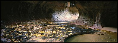 Tunnel-like opening and autumn leaves. Zion National Park (Panoramic color)