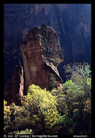 The Pulpit, temple of Sinawava, late morning. Zion National Park (color)