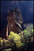 The Pulpit, temple of Sinawava, late morning. Zion National Park, Utah, USA.