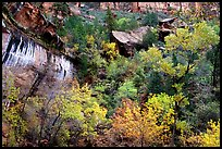 Sandstone cliff, waterfall, and trees in autum colors l. Zion National Park, Utah, USA.