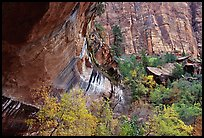 Sandstone cliff and trees in autumn foliage. Zion National Park, Utah, USA.