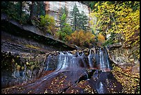 Cascade and tree in autumn foliage, Left Fork of the North Creek. Zion National Park, Utah, USA. (color)