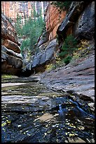 Entrance of the Subway, Left Fork of the North Creek. Zion National Park ( color)