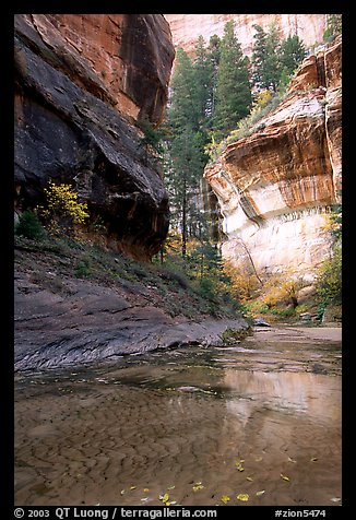 Cliffs near the Subway, Left Fork of the North Creek. Zion National Park (color)