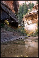 Cliffs near the Subway, Left Fork of the North Creek. Zion National Park, Utah, USA.