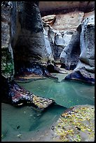 Pools and sculptured sandstone walls, the Subway, Left Fork of the North Creek. Zion National Park, Utah, USA. (color)