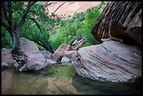 Pool, bouders, and trees, Pine Creek Canyon. Zion National Park ( color)