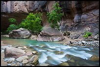 Trees in early summer and alcove, the Narrows. Zion National Park ( color)