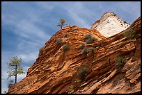 Trees, red and white cliffs, East Zion. Zion National Park ( color)