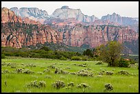 Tall grasses and rock towers, Kolob Terraces. Zion National Park ( color)
